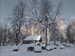 podgotovka_zimovke