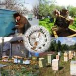 Календарь основных работ пчеловода