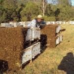 Основные ошибки начинающих пчеловодов