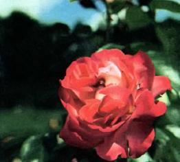 roza_anitke_89