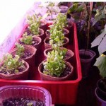 Садово-огородные работы в феврале