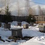 Помощь неблагополучным пчелосемьям весной