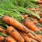 Отправляем морковь на зимовку