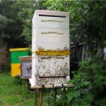 Пчеловодство Финляндии