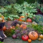 Сентябрь в саду