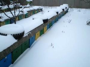 Зимовка в ульях без дна