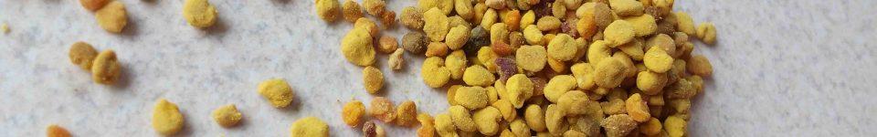 Пыльца собранная пчелами