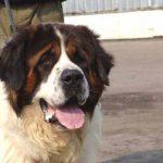 Заводим сторожевую собаку для двора