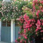 Украшаем сад розами