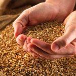 Оптовые покупки зерна