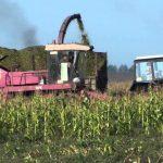 Уборка кукурузы на силос