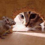 Как избавится от мышей в частном доме