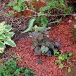 Как правильно мульчировать почву в саду