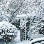 Что нужно сделать в саду зимой