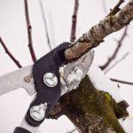 Зимняя обрезка фруктовых деревьев