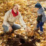 Посадка деревьев осенью