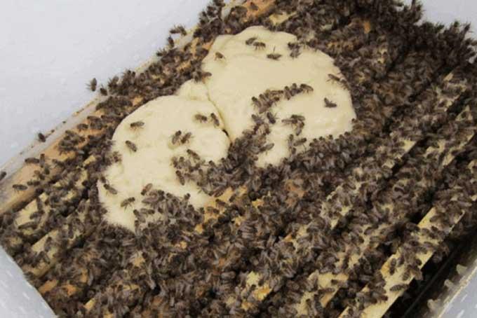 Подкормка пчел зимой (канди)