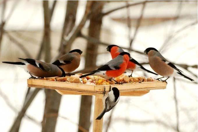 Птицы зимой у кормушки