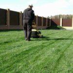 Эффективный контроль над сорняками на газоне