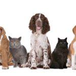 Средства от паразитов для кошек и собак