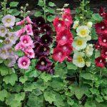 7 растений, благодаря которым можно привлечь пчел в ваш сад
