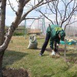 Весенние работы в саду: обработка и подкормка