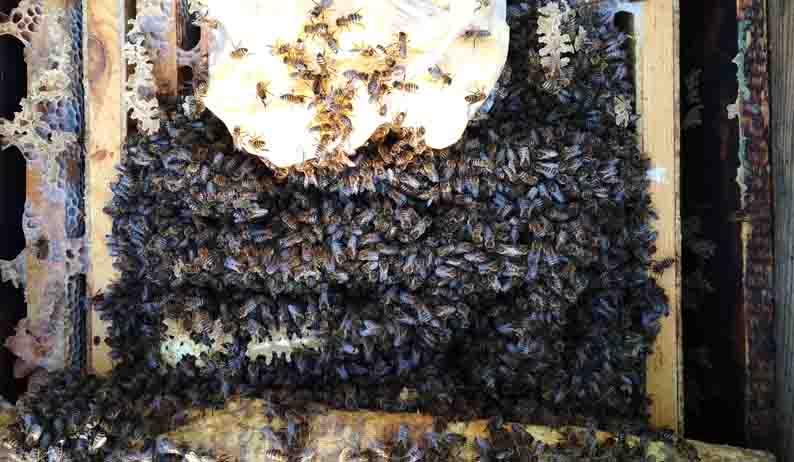 Весенняя подкормка пчел