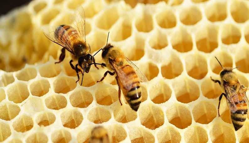 пчелы на восковом соте