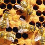 Нервная система пчел