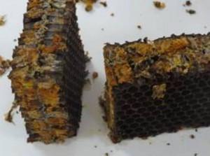 Как приготовить мёд с пергой