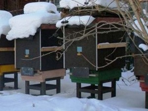 Финский опыт зимовки пчел