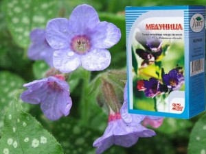 Лечебные свойства медуницы