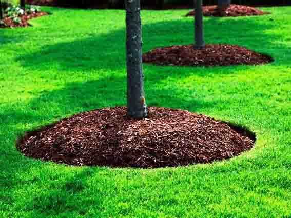 оформить приствольный круг у дерева