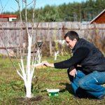 Весенние вредители сада и как сними бороться