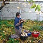 Грибы на даче или способы выращивания грибов